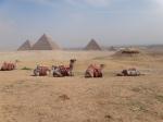 Camels @ Giza Oct 23, 2011