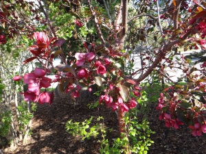 Blossoms in Shadow 2015