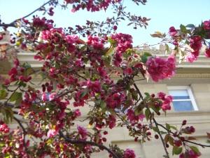 Spring Blossoms 2015