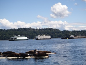Fanny Bay, Vancouver Island, BC - Seals & Boats May 2013