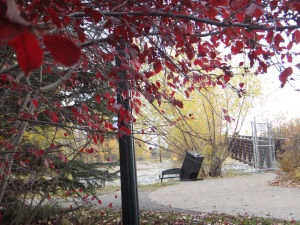 Fall Colours, Oct 12, 2015