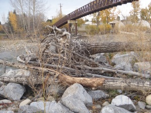 Uprooted Trees from 2013 Flood, Sheep River, Okotoks, AB Canada