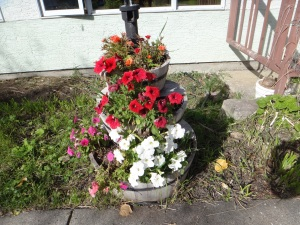 September Still Flowering!